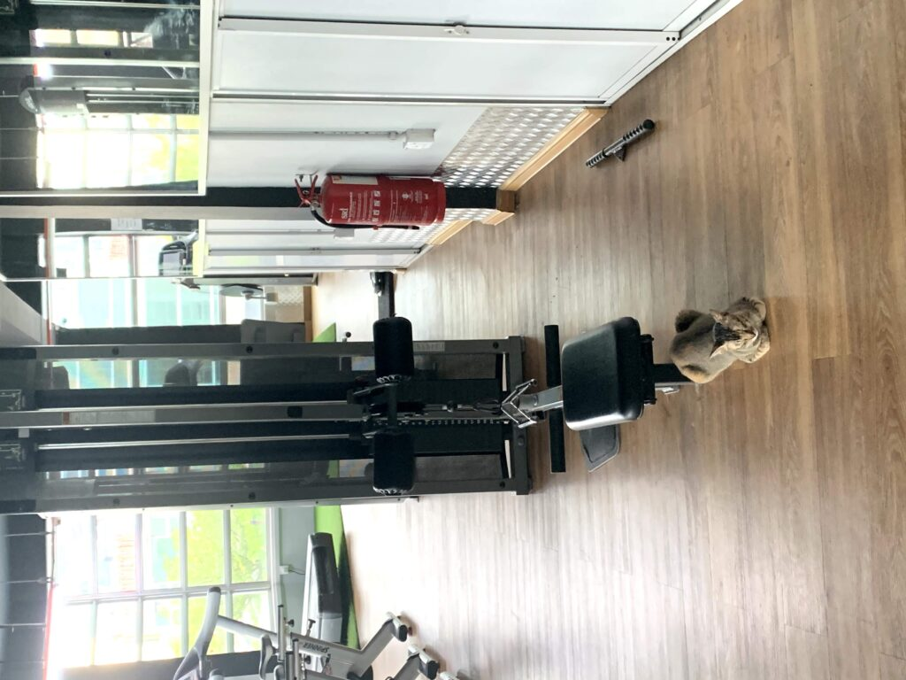 This gym cat in Malacca, Malaysia was a pleasant surprise to see!